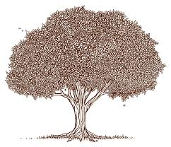 pecan tree clip art. Delighful Tree Pecan Tree Clipart And Clip Art