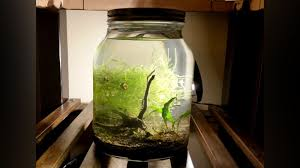 ilration for article titled make an indoor water garden in a jar for carefree greenery