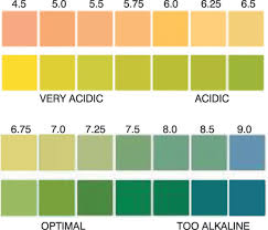 Ph Test Chart - Koto.npand.co