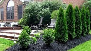 garden design under pine tree i garden design ideas