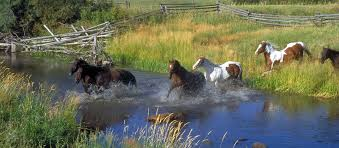 Protecting Your Horses During Hot Virginia Summers - 🐎 Virginia Horse  Farms for Sale