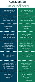 Venn Diagram Of Vascular And Nonvascular Plants What Is The Difference Between Vascular And Nonvascular