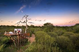 Tree House Hotel In South Africa Lion Sands Chalkley Treehouse Treehouse Hotel Africa