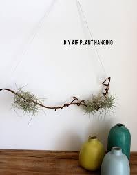 diy air plant hanging aliceandlois com