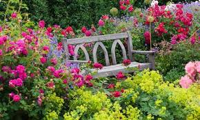 Small Picture Underplanting Roses And Shrubs Inspiring Garden Ideas for all