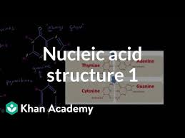 Nucleic Acid Structure 1 Video Khan Academy