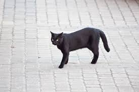 superstitions related keywords suggestions superstitions long 838 words essay on superstitions to read