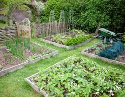 Small Picture Vegetable Garden Layout Ideas Garden Design Ideas