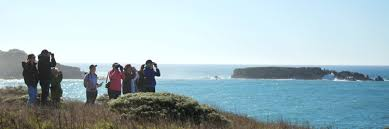 Whale Watching In Sonoma County Parks Blog Learn
