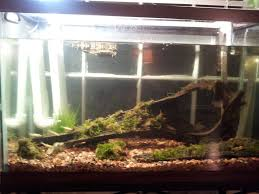 Turtle Tank Decor Turtles Aquarium Turtle Tank Plan Sequa