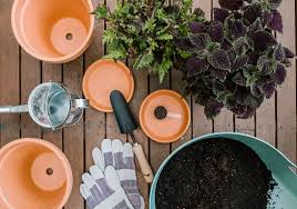 21 best patio plants to grow