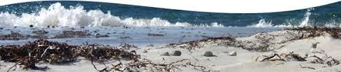 Ostsee Urlaub Infos Für Den Urlaub Entlang Der Ostsee