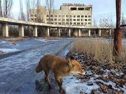 Chernobyl: el ser humano es más peligroso que la radiación | AgendAR