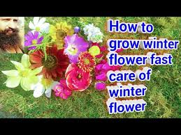 how to grow winter flower fast care