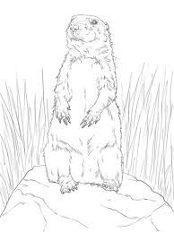 Prairie Dog Standing Up Coloring Page Free Printable Coloring Pages