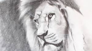 realistic lion face drawing. Fine Drawing How To Draw A Realistic Lion With Face Drawing I