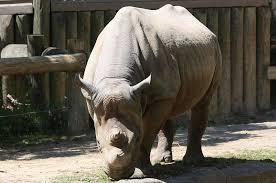 Rhino skin Photograph by Chris Paglia