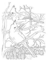 Small Picture hummingbird pictures to print for free Animals Coloring Pages