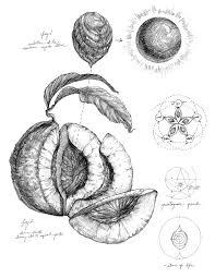 Magical Botanical Etching