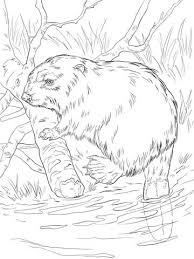 Eurasian Beaver On A River Bank Coloring Page From Beavers Category