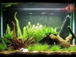 fishtank decor diy homemade diy aquarium decorations oo tray design aquariu on home decor view how