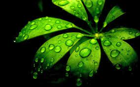 Green Flowers Wallpapers - Wallpaper Cave