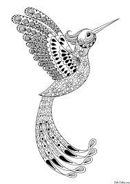 раскраска колибри в полёте черно белые картинки раскраски