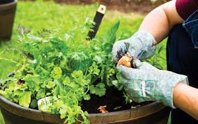 mulching protects your garden topsoil from being n away it also provides nutrients as it decomposes and improves the appearance of your gardens