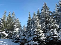 11 Places To Get Fresh Live Christmas Trees In NebraskaChristmas Tree Cutting Nj