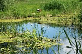 Vlastníci půdy podle zemědělců brání projektům pro zadržování vody    Zemědělec