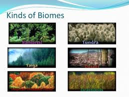 What Are Biomes Biomes