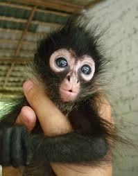 cute monkey makeup face photo 9