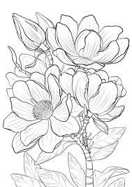 Magnolia De Campbell Dibujo Para Colorear Droedels Dibujos De