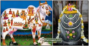 Image result for kamadhenu pictures