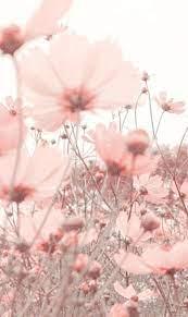 Flower wallpaper ...