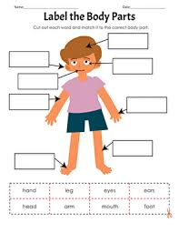 Body Part Chart For Toddlers 33 Exhaustive Body Parts