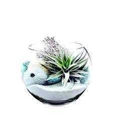 plants in glass bowl plants in glass bowl floating glass bubble fish designs bowl terrarium bowls