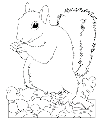 Free Coloring Pages Of Squirrels Red Squirrel Page Printable Yoloerco