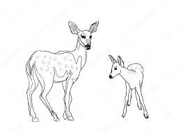 Hand Drawn Realistic Sketch Of Deers Stock Photo Valenty