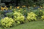 mesophytic plant