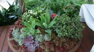 outdoor potted plants full sun photo 17