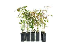 order plants online. Buy Plants Online Cheap Order Houseplants Firestorm In A Box Free N