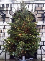 office christmas trees. Office Christmas Tree Trees