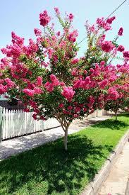 Best 25 Backyard Trees Ideas On Pinterest  Backyard Privacy Good Trees For Backyard