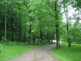 tree plantation or importance of tree plantation reading library tree plantation