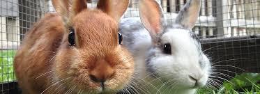 petsmart animals bunny. Exellent Petsmart Article Hero Image To Petsmart Animals Bunny E