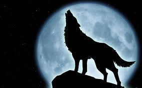 howling wolf wallpaper. Delighful Wolf Howling Wolf Wallpaper  WallpaperSafari Inside