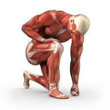 muscle aches statins ile ilgili görsel sonucu