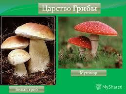Реферат На Тему Грибы Краснодарского Краян sponiserpon Краснодарского грибы краян на тему реферат