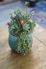 Lots of #Impact - 43 Outstanding #Succulent Gardens You Can Create at